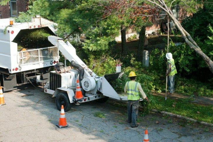 Arboricultural Consulting