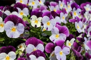 A group of flowers for adding color to your landscaping